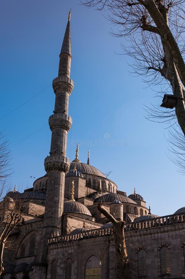 Blå moskélodlinje arkivfoton