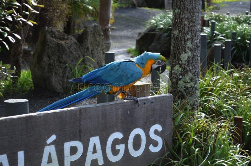 Blå och guld- arapapegojafågel på ett trätecken royaltyfri bild
