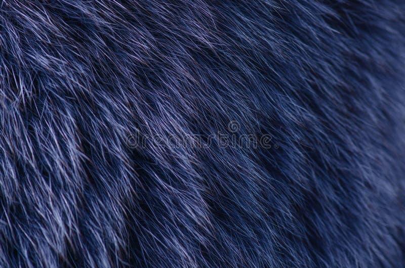 Blå pälsmakro arkivbilder