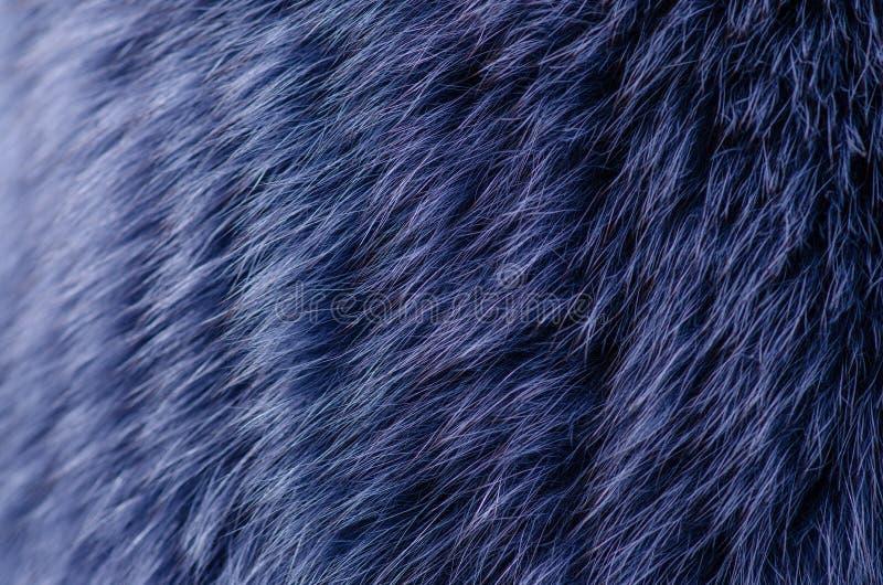 Blå pälsmakro royaltyfri bild