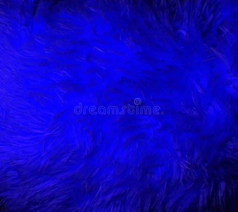 Blå pälsmakro royaltyfri foto