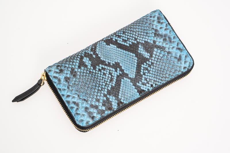 Blå plånbok med det gråa bandet i mitt av ormhud som isoleras på vit bakgrund arkivfoto
