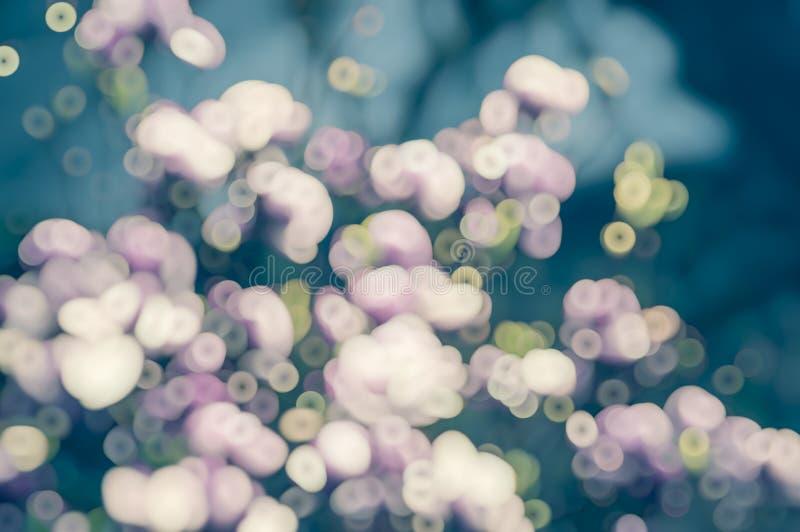 Blå rosa suddig blom- bokehbakgrund royaltyfri bild