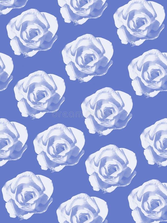 Blå rosbakgrund arkivfoton