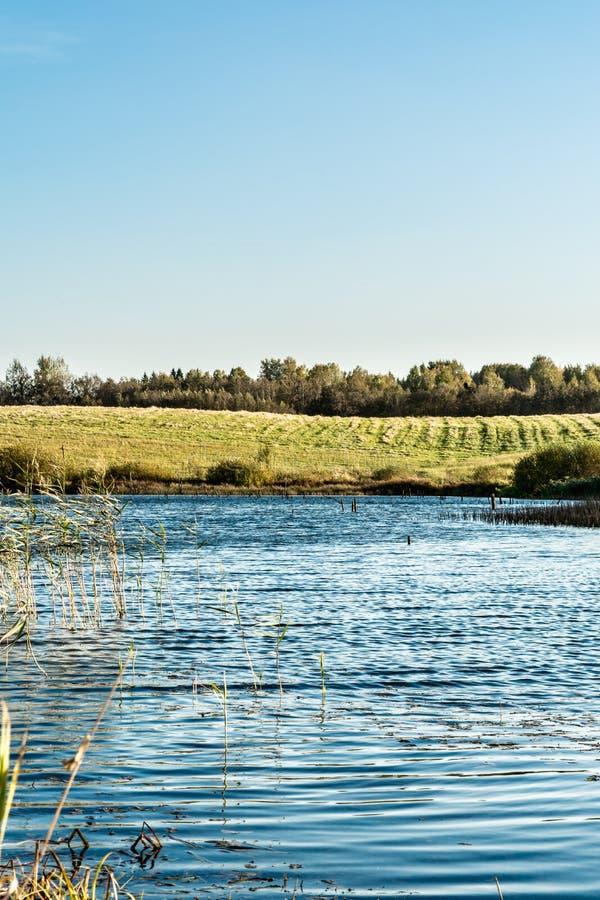 Blå sjö med kuster som är bevuxna med gräs och träd, höstlandskap med ett sumpigt vatten och det skiftande ljuset royaltyfri fotografi