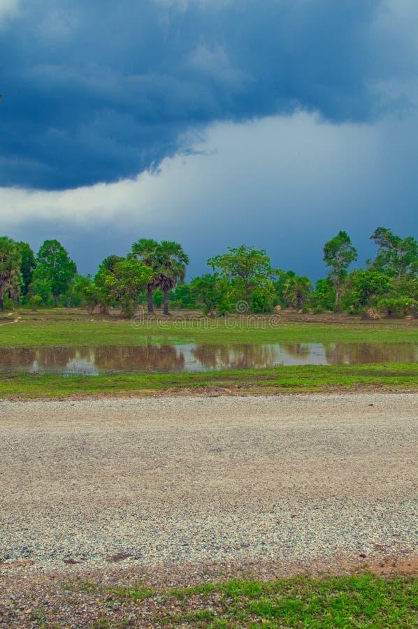 blå sky för cambodia fältrice royaltyfri bild