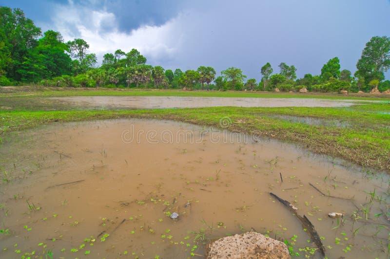 blå sky för cambodia fältrice arkivfoto