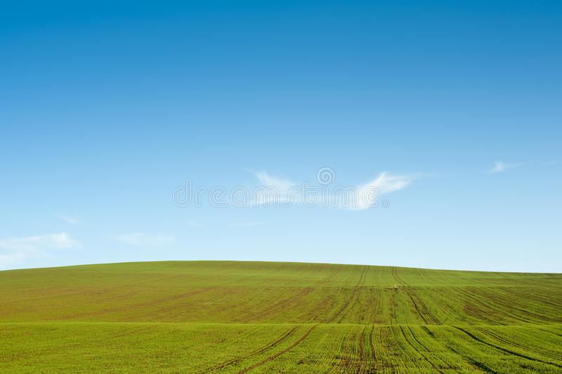 blå sky för fältgreehorisont royaltyfri fotografi