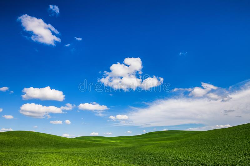 Blå sky för grönt fält fotografering för bildbyråer