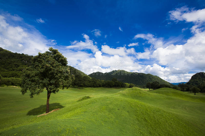 Blå sky med grön kurs royaltyfri foto