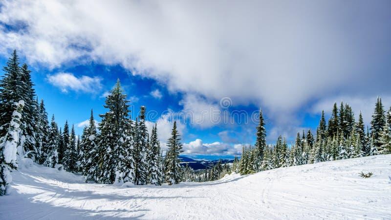Blå täckte himmel och snö sörjer trädet på en Ski Hill arkivfoto