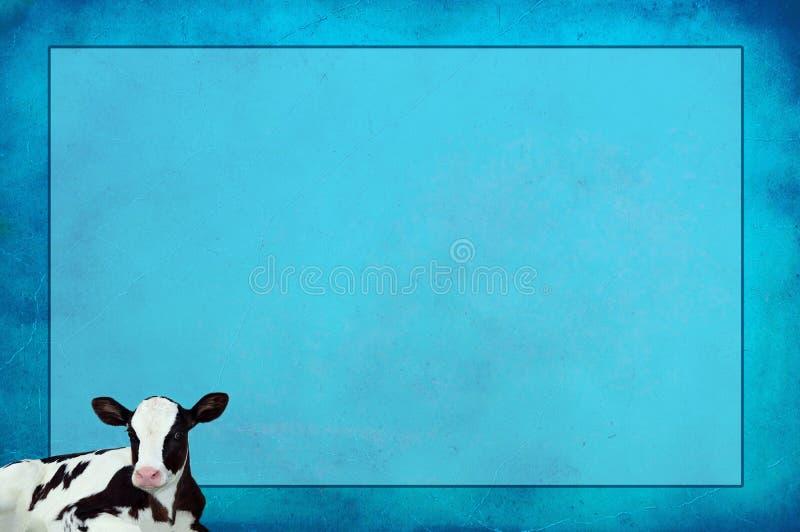 Blå texturerad bakgrund med den Holstein kalven royaltyfria foton