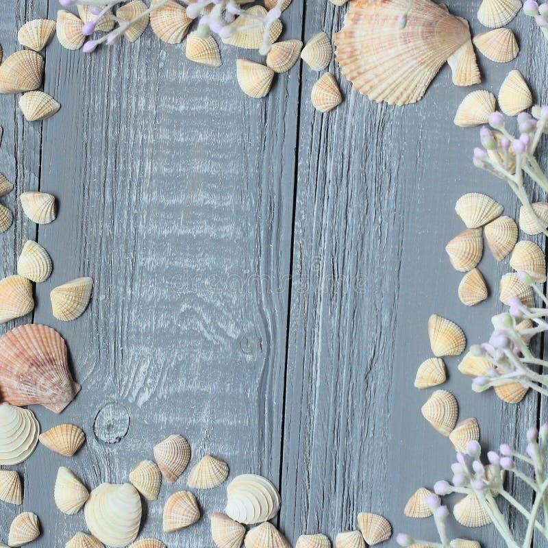 Blå träbakgrund med snäckskal och koraller arkivbilder