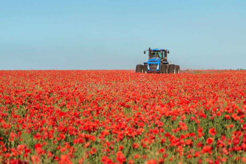 Blå traktor i det röda vallmofältet royaltyfria foton