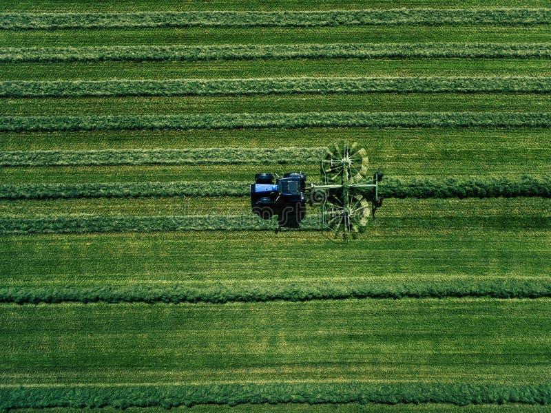 Blå traktor som mejar det gröna fältet, flyg- sikt royaltyfri fotografi