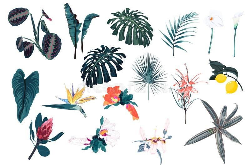 Blå tropisk uppsättning, palmblad, djungelblad och exotiska blommor stock illustrationer