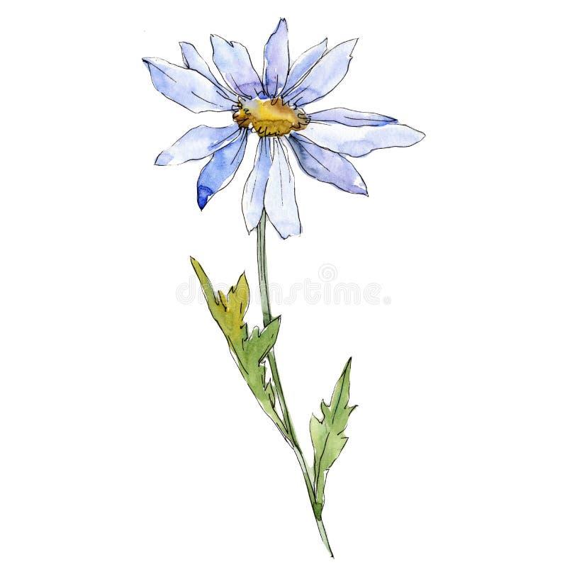 blå tusensköna Blom- botanisk blomma Lös isolerad vårbladvildblomma stock illustrationer
