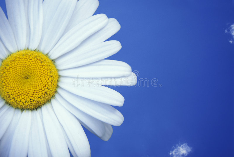 blå tusenskönasky royaltyfria foton