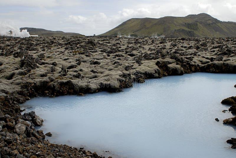 blå växt för uppvärmningslagunyttersida royaltyfri foto