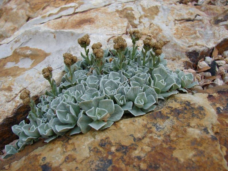 Blå växt i en spricka royaltyfria bilder