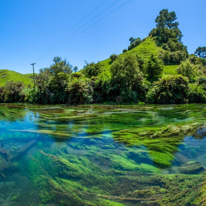 Blå vår som lokaliseras på Te Waihou Walkway, Hamilton New Zealand arkivfoton