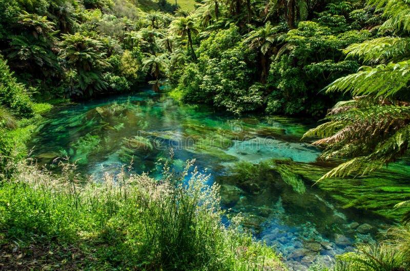 Blå vår som lokaliseras på Te Waihou Walkway, Hamilton New Zealand royaltyfria foton
