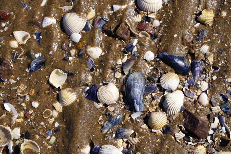 Blå vit sandstrandbakgrund med vatten som flödar över skal royaltyfri fotografi