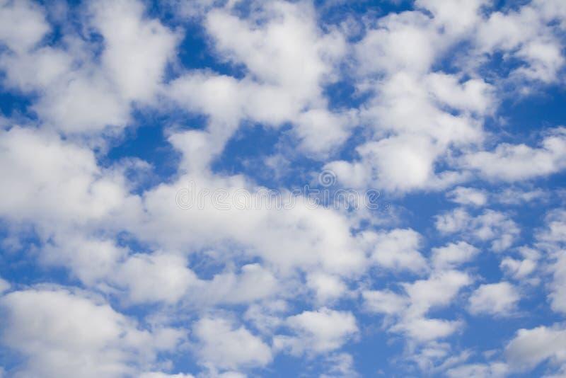 blå white fotografering för bildbyråer