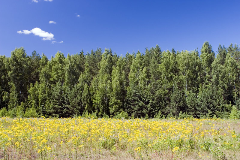 Blå Yellow För Sky För Fältskoggreen Arkivfoto