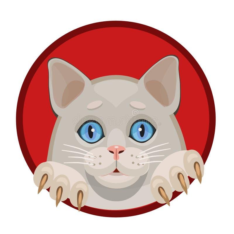 Blåa ögon för vit kattunge arkivfoton
