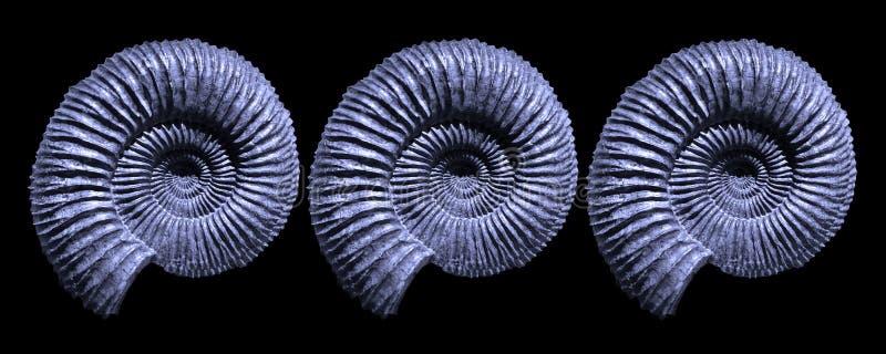 Blåa ammonitfossil