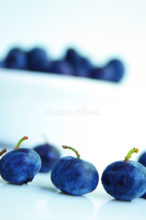 blåa bär royaltyfria foton