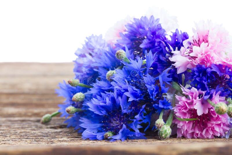 blåa blåklint royaltyfri fotografi