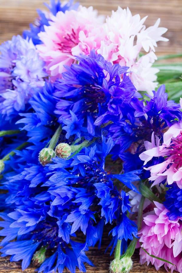 blåa blåklint arkivbild