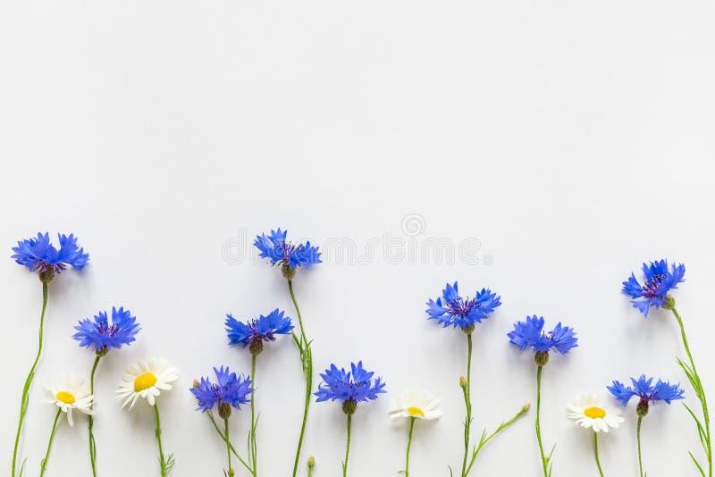 Blåa blåklinter för sommar och tusenskönablommor på vit bakgrund royaltyfria foton