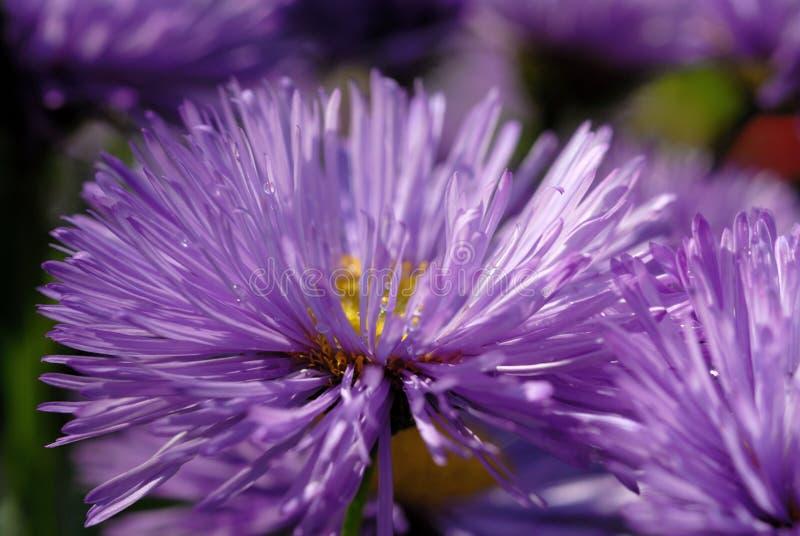 Blåa blommor i blomsterrabattcloseupen arkivbild