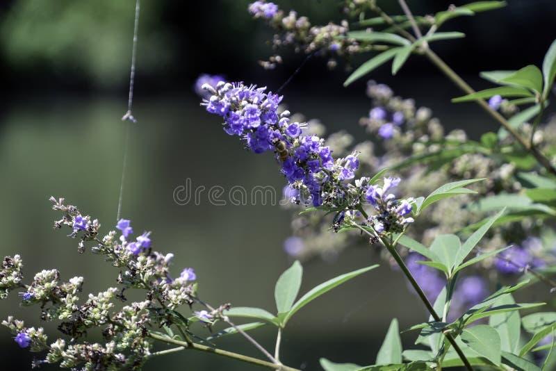 Blåa blommor med det spindelrengöringsduk och biet royaltyfria bilder