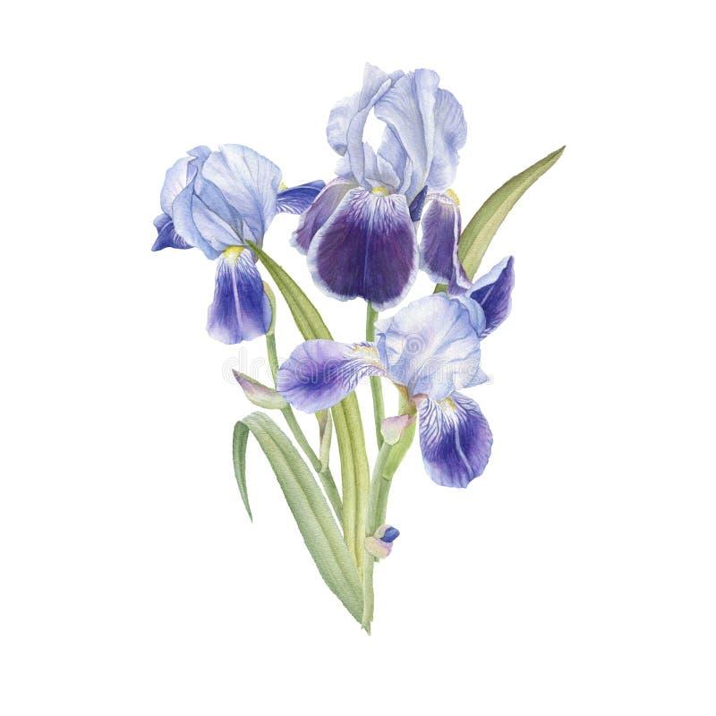 blåa bukettfantasiirises royaltyfri illustrationer