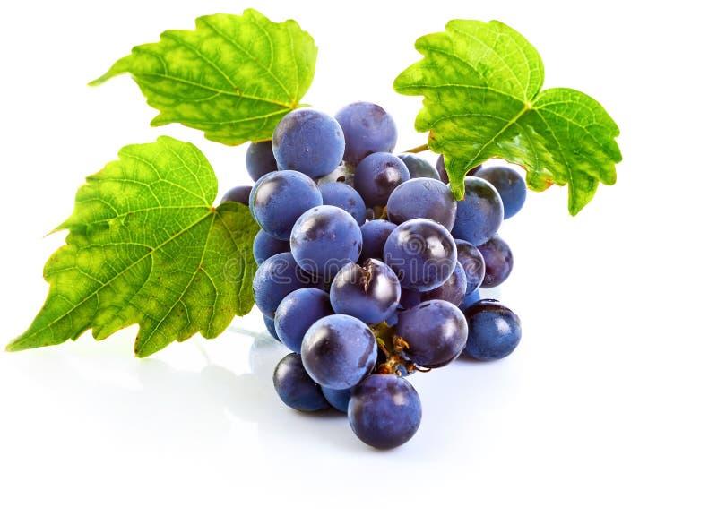 Blåa druvor med sunt äta för grönt blad royaltyfri foto