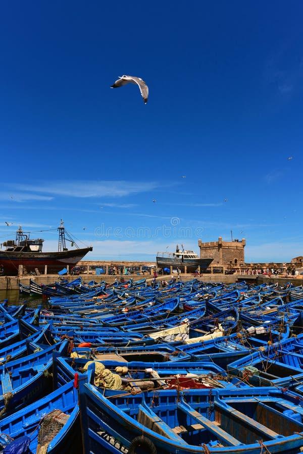 Blåa fiskebåtar i porten av Essaouira - Marocko arkivbilder