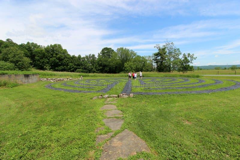 Blåa himlar över labyrinten som göras med nya lavendelväxter, folk som irrar till och med design, Lavenlair lantgård, Whitehall,  arkivbild