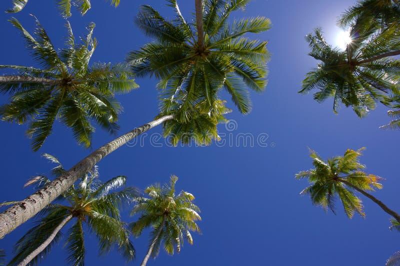 Blåa himlar ovanför kokospalmer royaltyfri fotografi