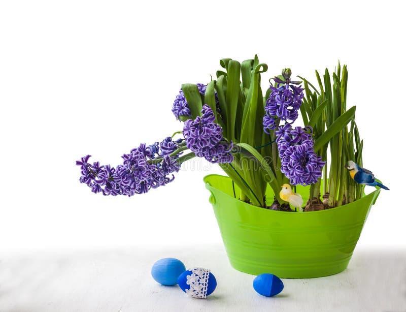 Blåa hyacinter i en grön pilbåge arkivbild