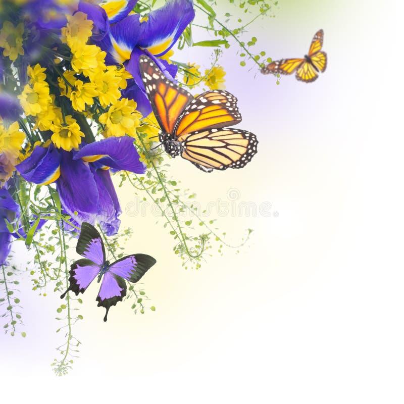blåa irises vektor illustrationer