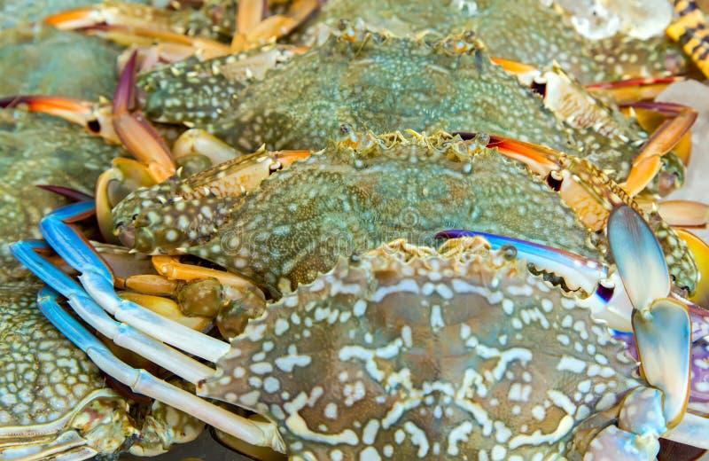 blåa krabbor royaltyfria bilder