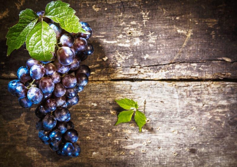 blåa lantliga brädedruvor royaltyfri fotografi