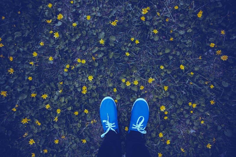 Blåa mockasin på en blomningäng fotografering för bildbyråer