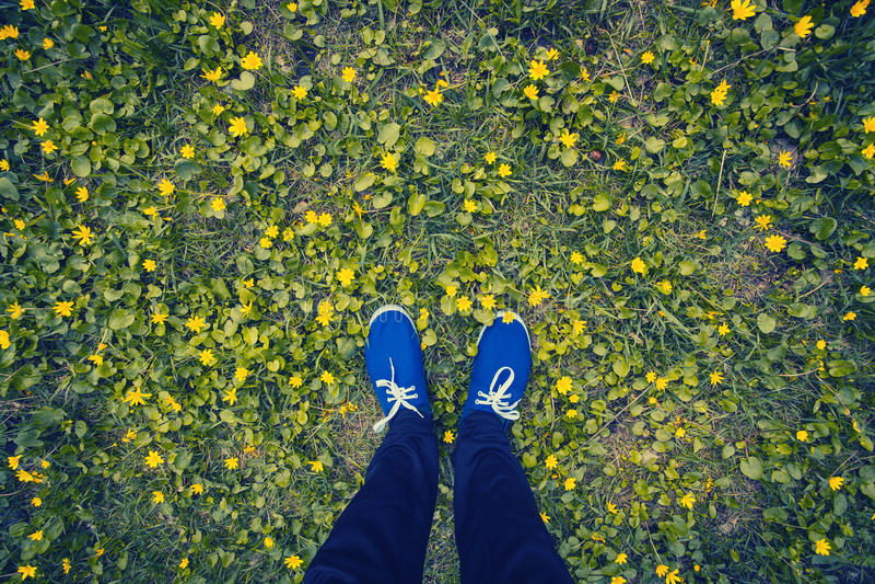 Blåa mockasin på en blomningäng royaltyfri bild