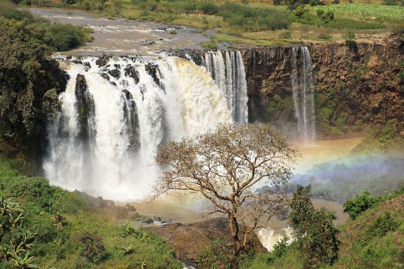 Blåa Nilennedgångar Bahar Dar, Etiopien royaltyfri foto