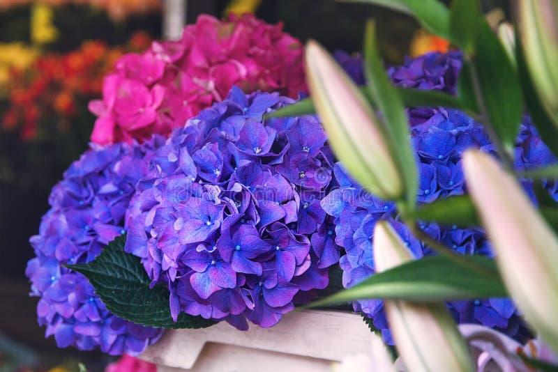 Blåa och purpurfärgade rosa vanlig hortensiablommor i en träask arkivbild